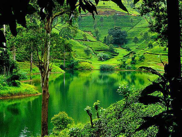 Остров Шри-Ланка фото