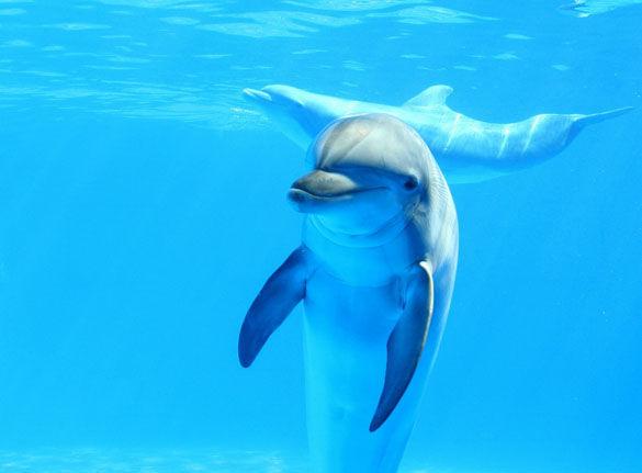 Риф Dolphins House фото