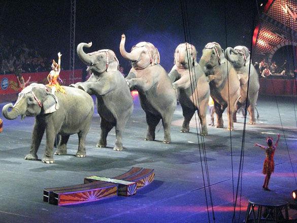 Танец слонов